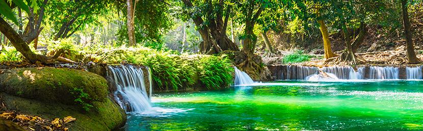 森林と清らかな水