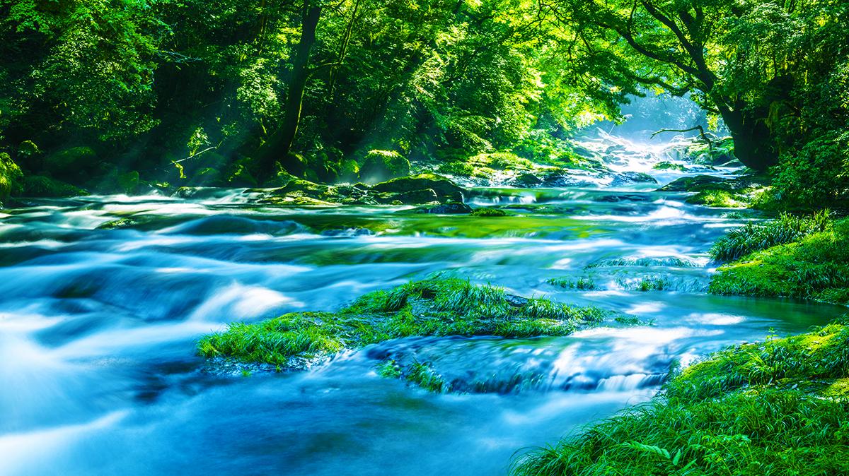 森を流れる川