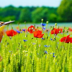 草原と色鮮やかな鳥