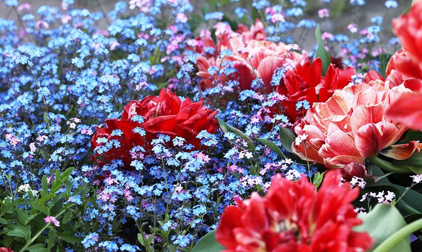 赤と青の花畑