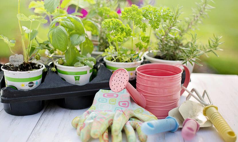 ピンクのじょうろと鉢植え