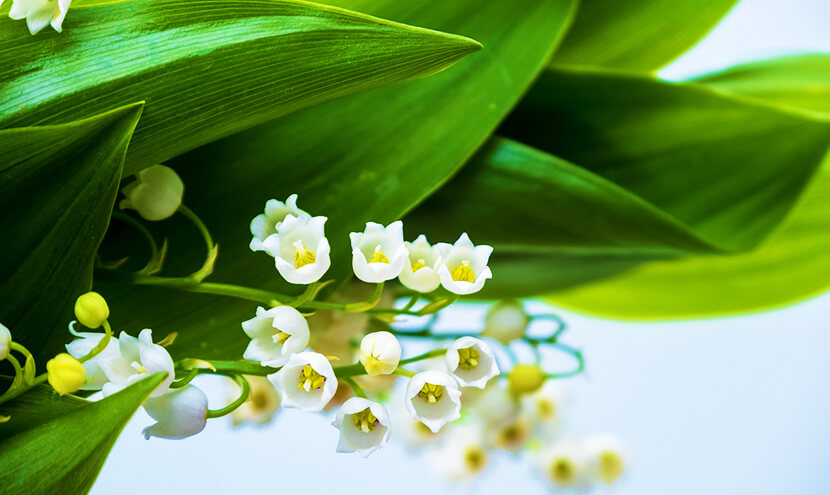 白の花と葉